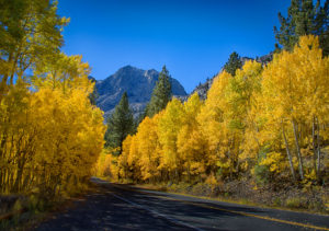 Fall Colors in the Eastern Sierras - Oct 2017 @ see outing detail sheet